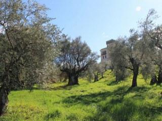 Uliveto Castello Santa Margherita