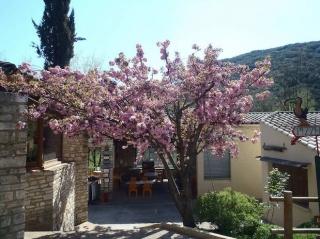 arbre Camping Ardèche