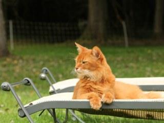 détente transat dans jardin Lonceux