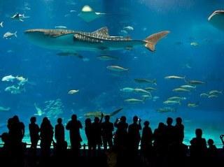 Aquarium-St Malo-Cancale-Bretagne-Cote-mer