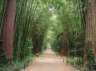 La bambouseraie - camping l olivier - nimes - junas - anduze