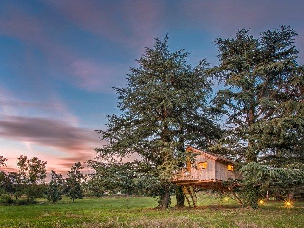 Cabane sur les arbres Château  Domaines des grands cèdres Loire