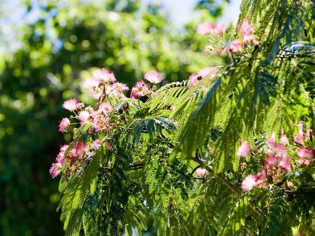 fleurs arbres