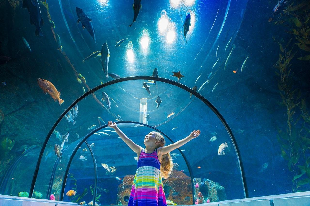 Hotel-boulevard-laurier-quebec-aquarium-du-quebec