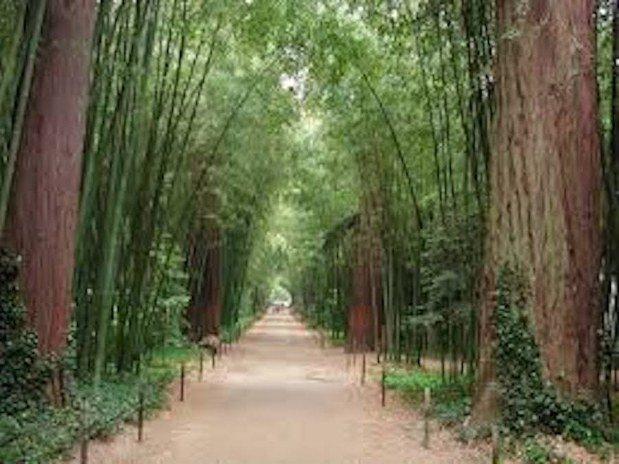 allée bambouseraie