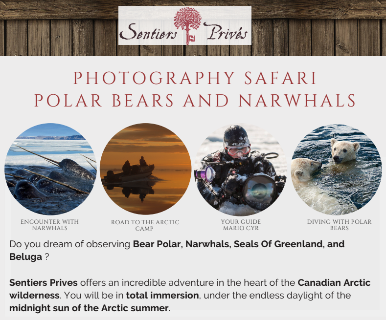 April 26 - Polar Bears and Narwhals