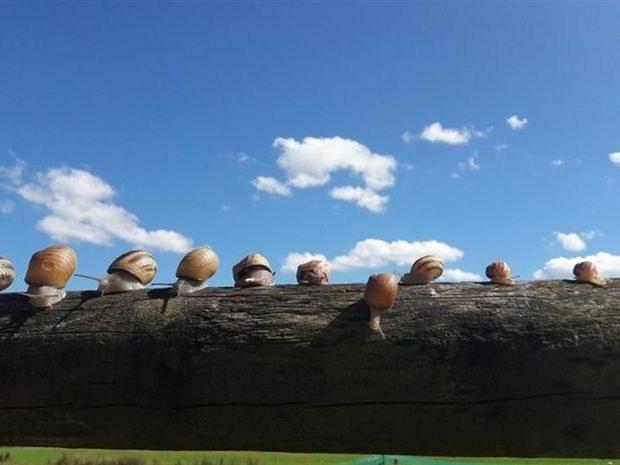 gite-groupe-jura-escargot de trémontagne
