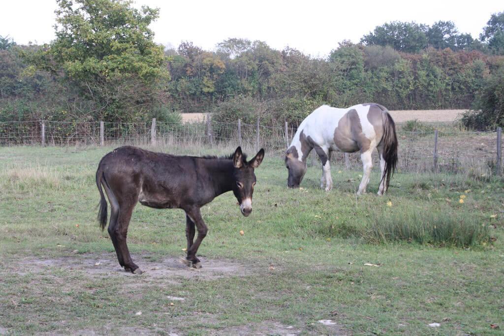 âne et poney Au Cochon Pailleux Exploitation Agricole à Châteuneuf
