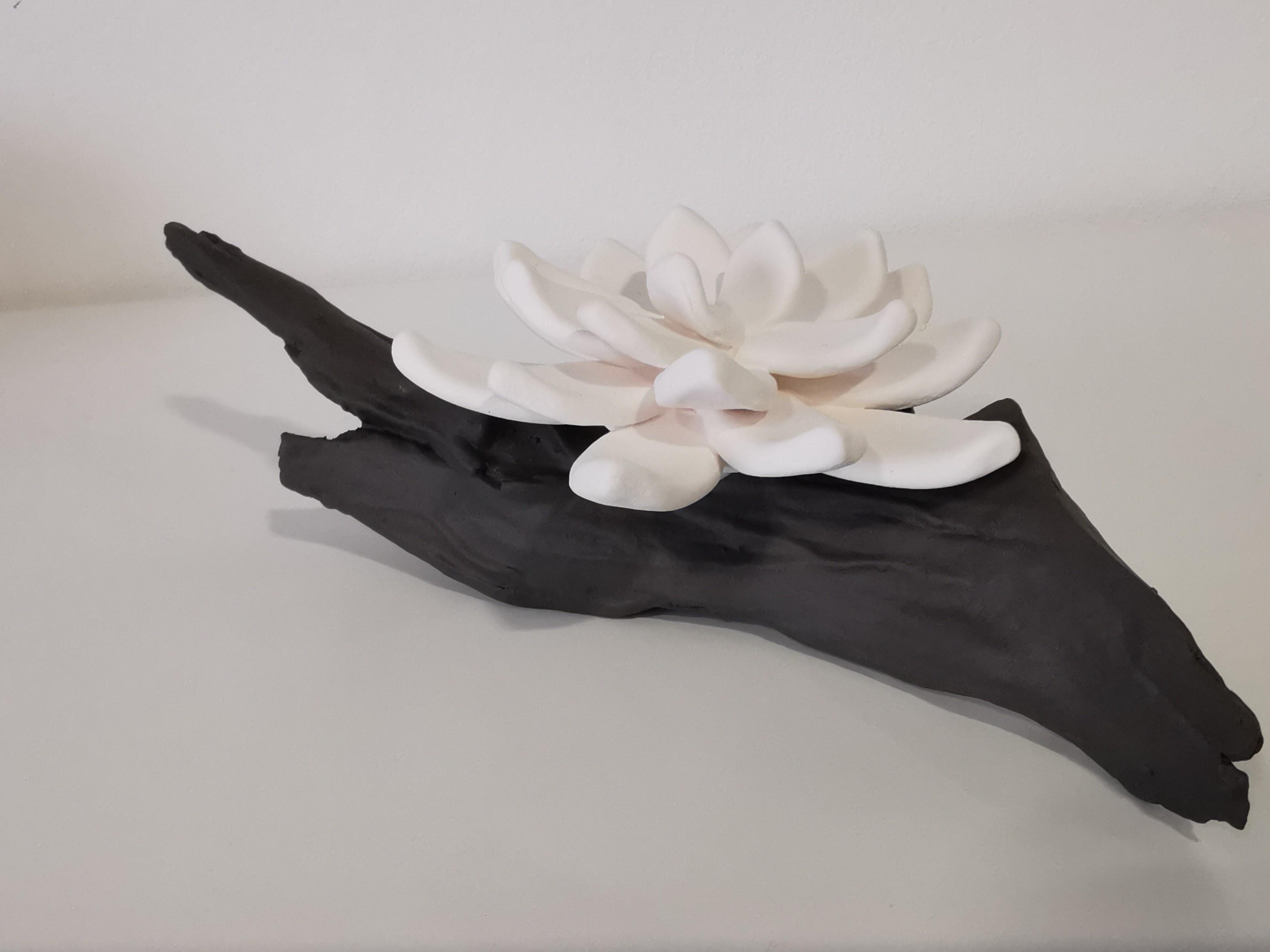 Fleur sur branche Anoq
