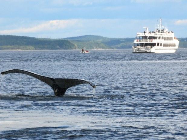 Auberge-Charlevoix-vue-fleuve baleine