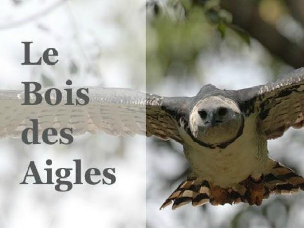 aigles