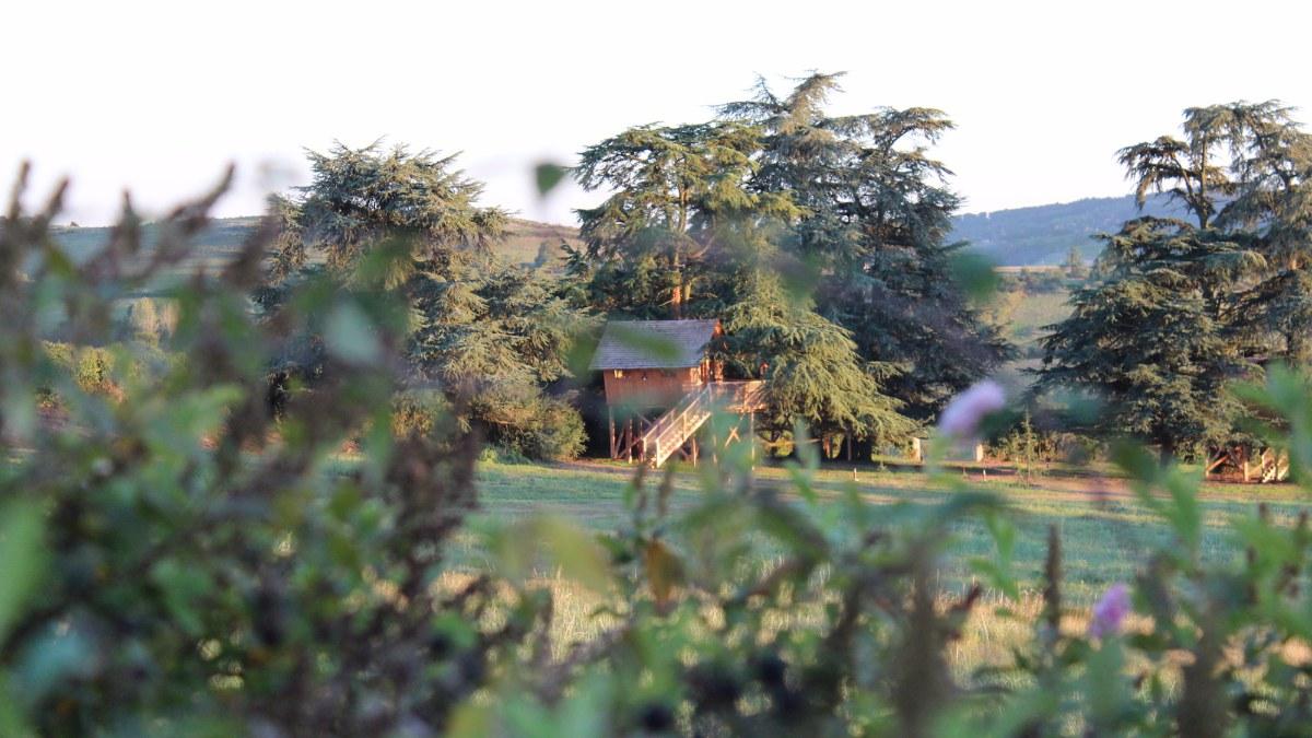Cabanes sur les arbres Domaine des grands Cèdr
