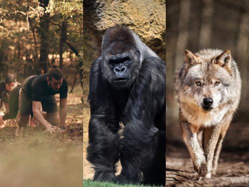 Wolf Movement, en avance sur son temps