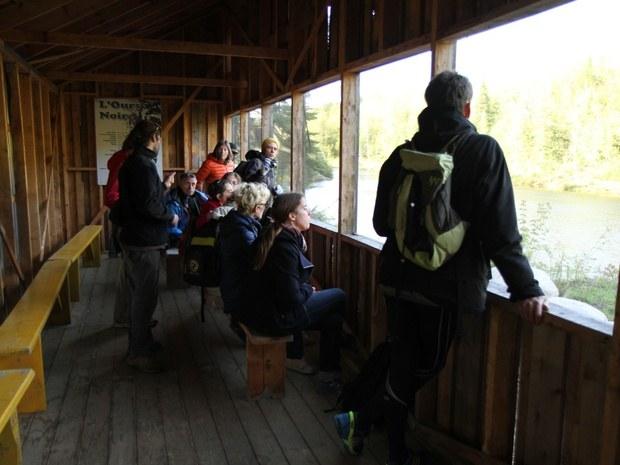 centre-de-villégiature-saint-alexis-des-monts-observation-ours
