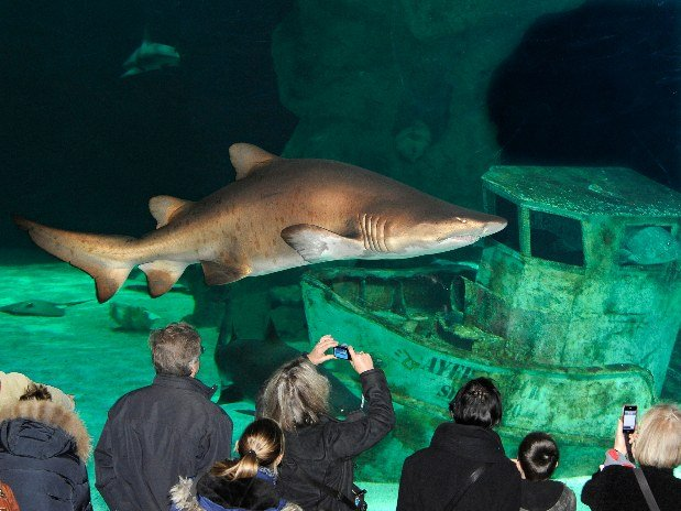villa-bettina-la-baule-ussim-vacances-ocearium-croisic-requins-bateau