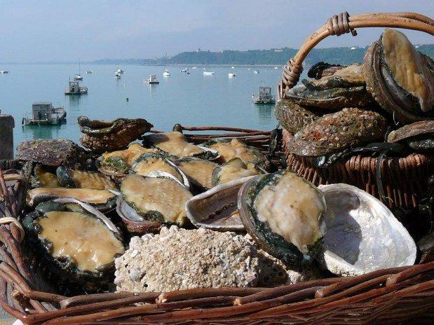 cancale fruits de mer