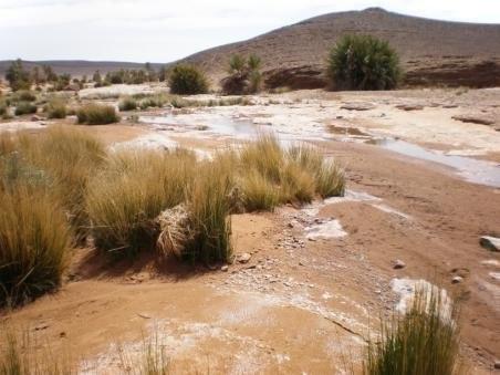 oasis virgen 3