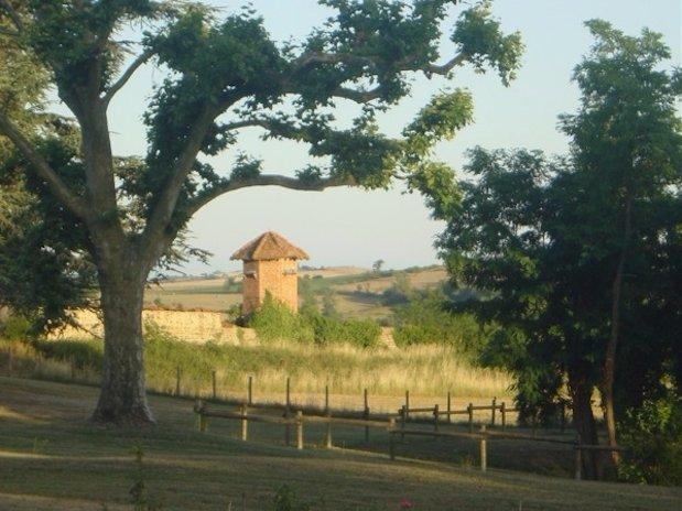 Cabane arbres Loire Domaine grands cèdres