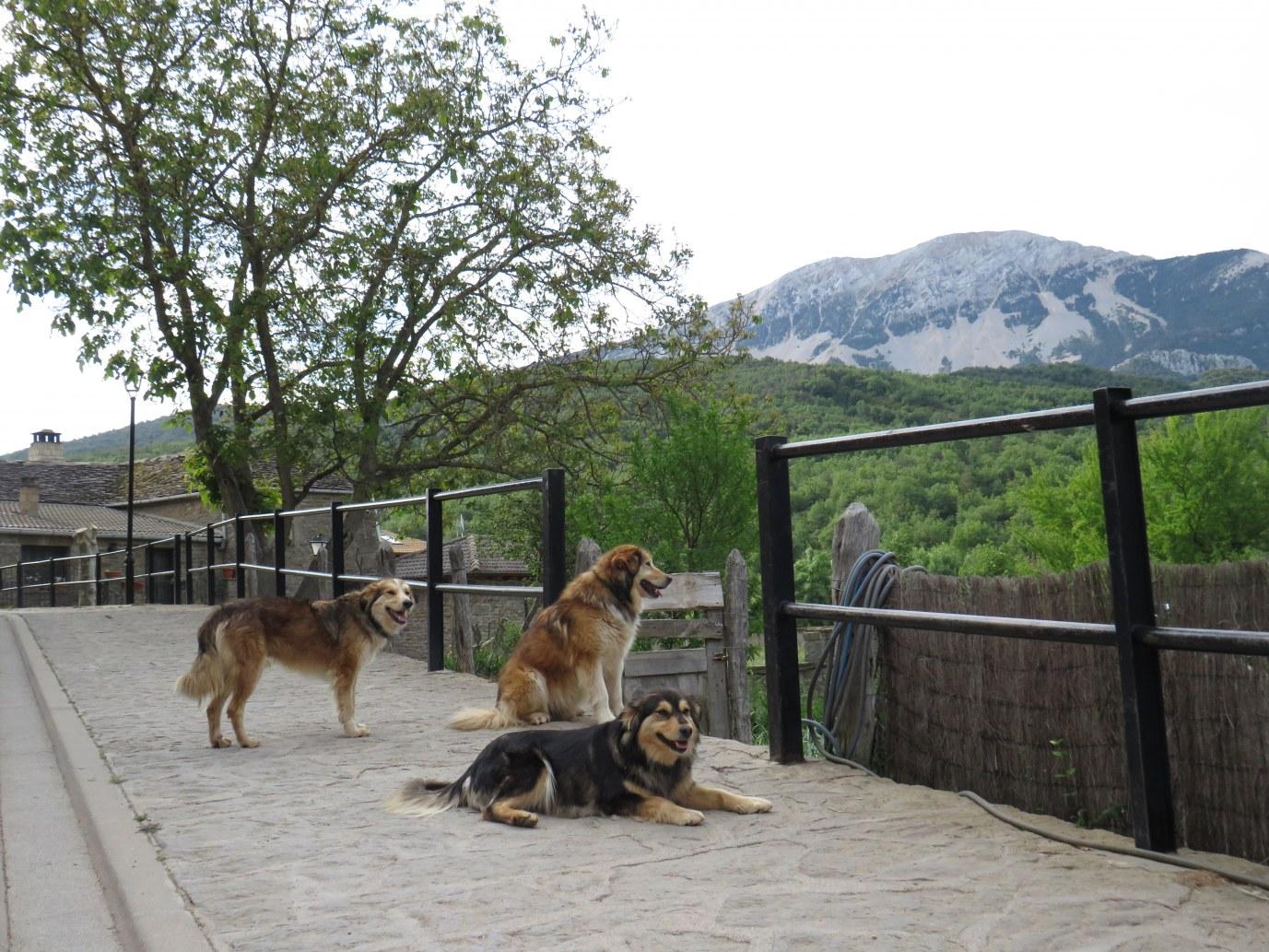 La Mallata dogs