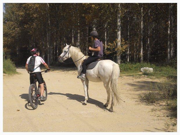 VTT cheval chemin