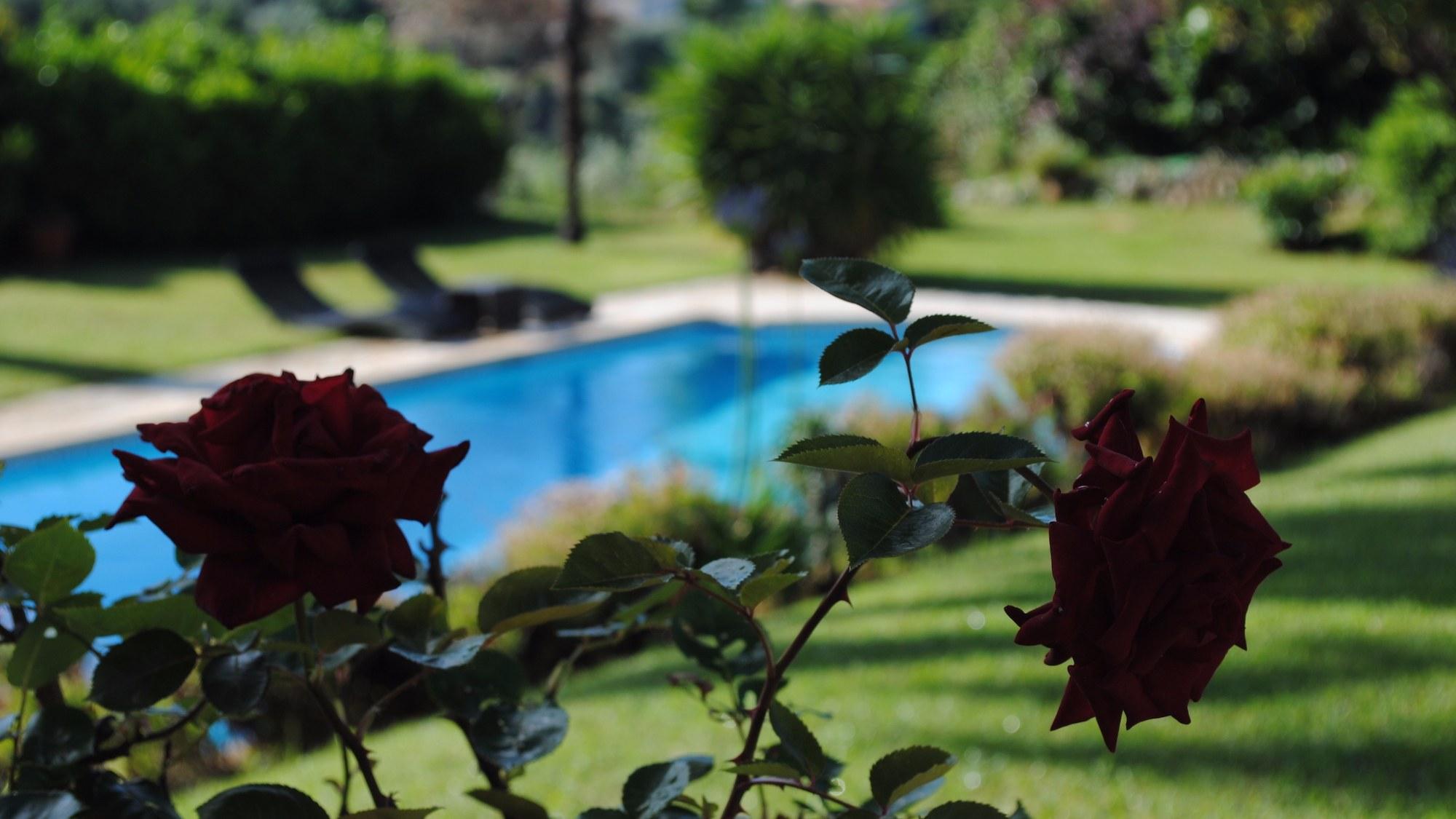 Vue-Jardin-Piscine-Villa-Antoline-Cagnes-sur-mer