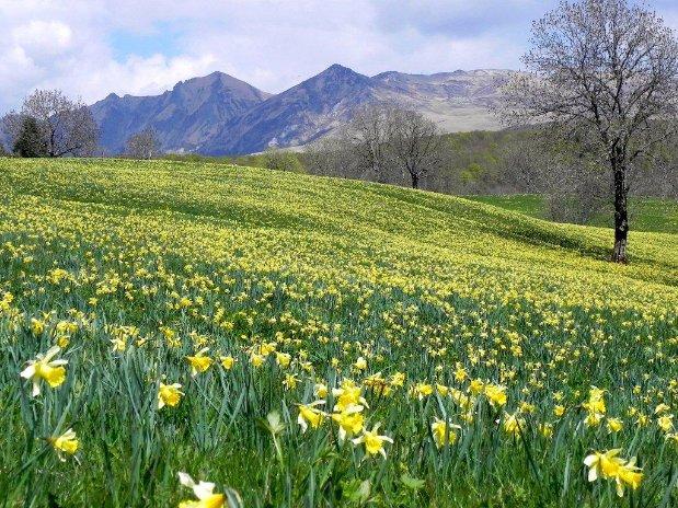 camping poutie - montagne - randonnées - auvergne - mont dore - la bourboule