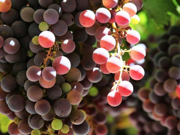 vin pronvence- repas - restaurant