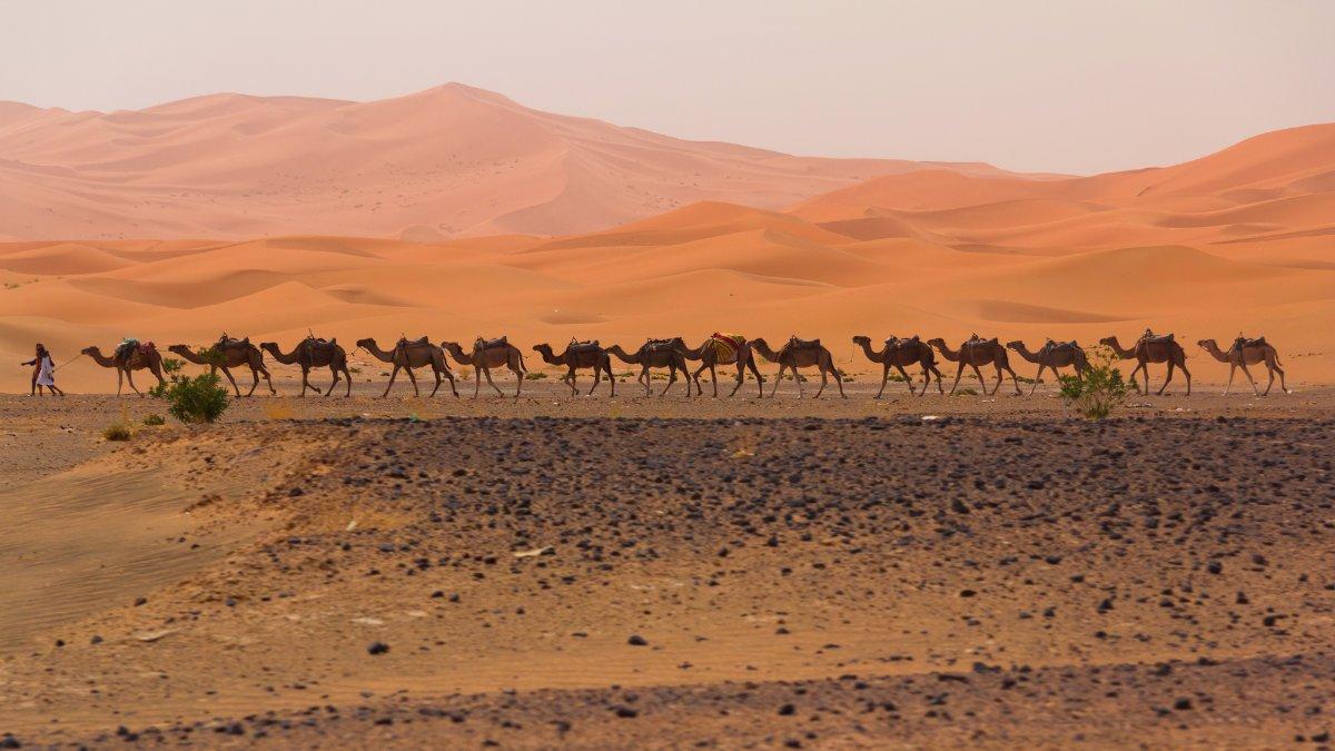 Chameaux Maroc Desert