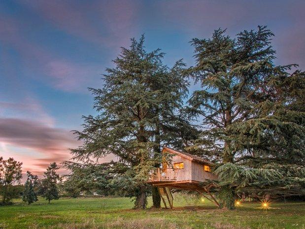 Cabane surs les arbres Loire Domaine cèdres