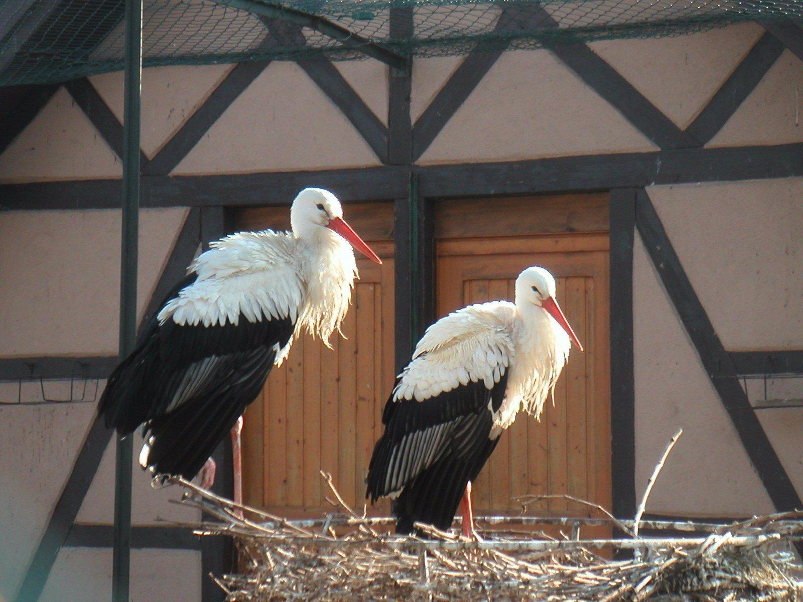 Au-bonheur-apprivoisé-Gîte-Alsace-Eguisheim-route-des-vins-cigognes