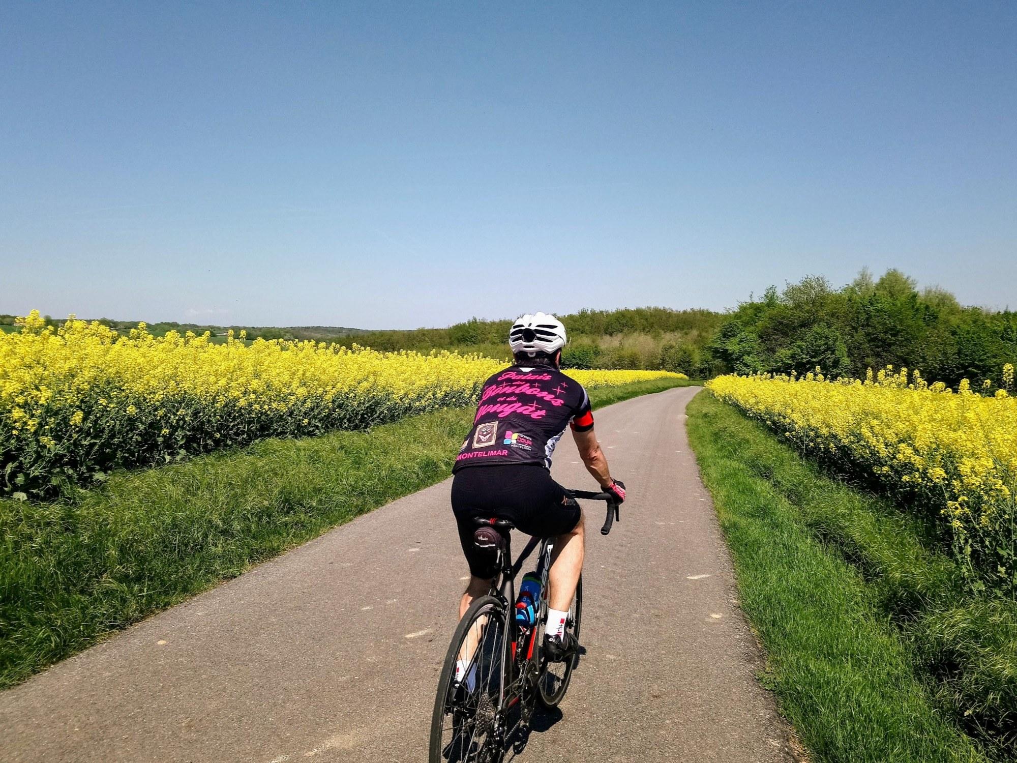 Vélo champ de colza