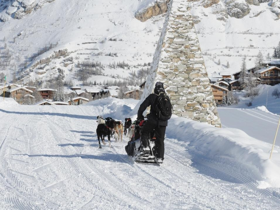 chiens de traîneau Val d'isère