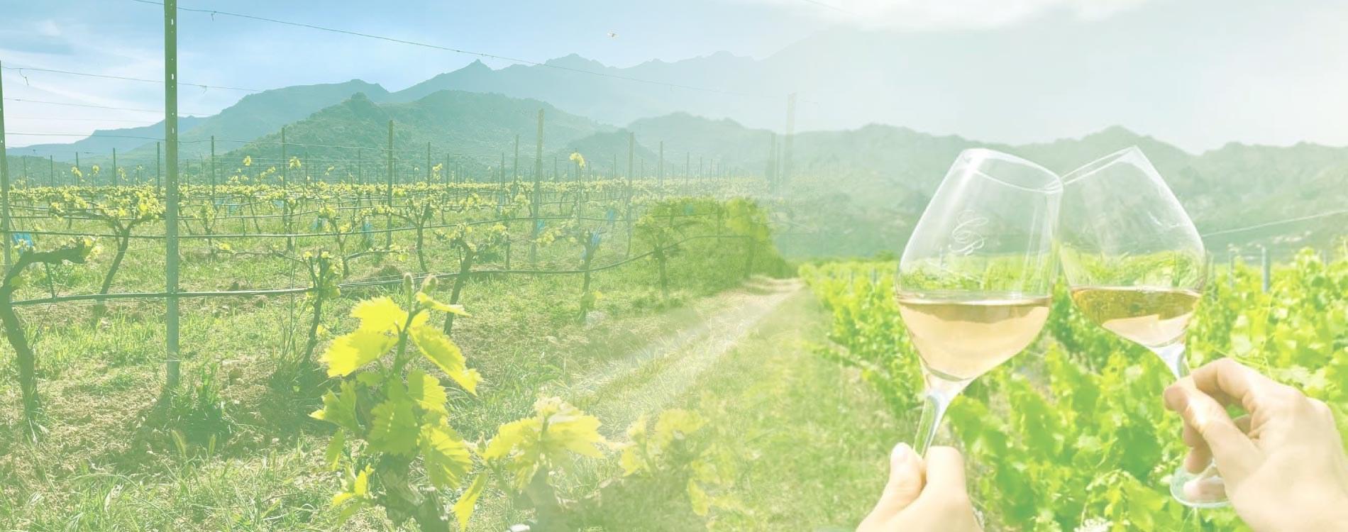 Dégustation de vins corse