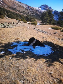 le repos de Quiqui, vous voyez il faut la chercher la neige..