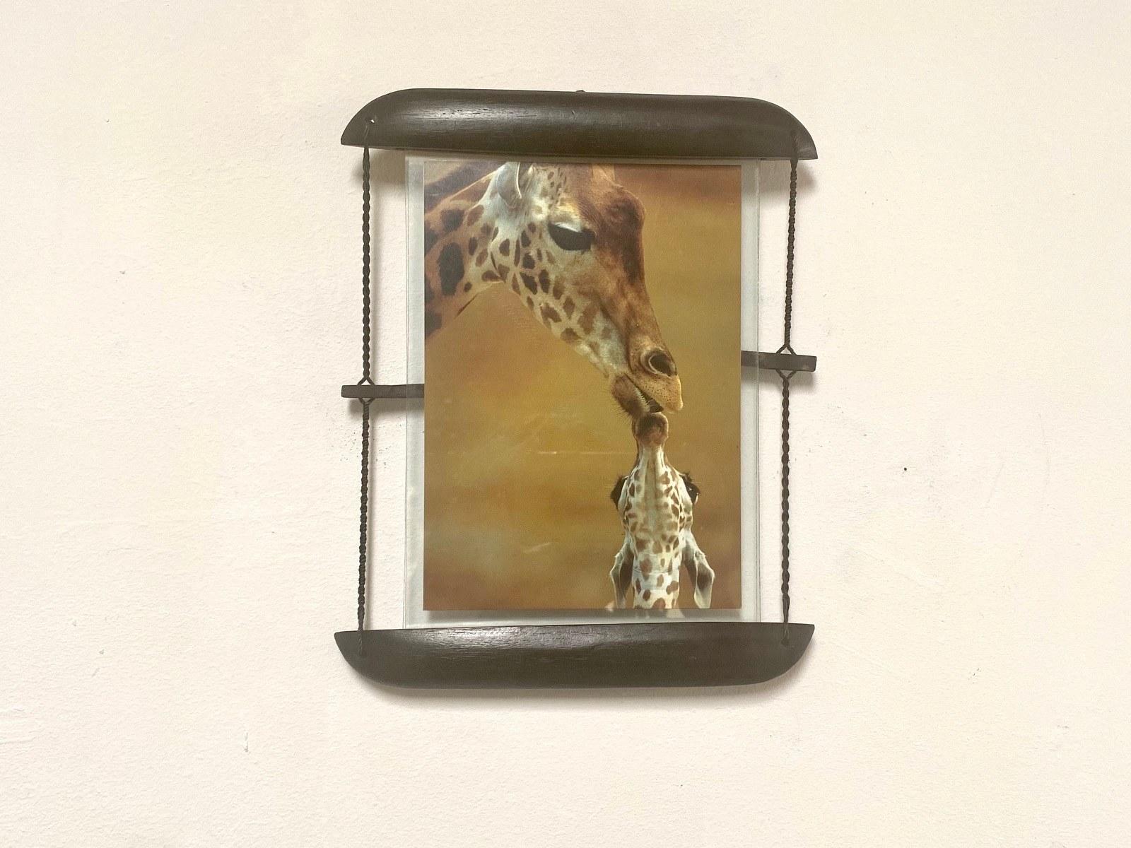 photo girafe girafon