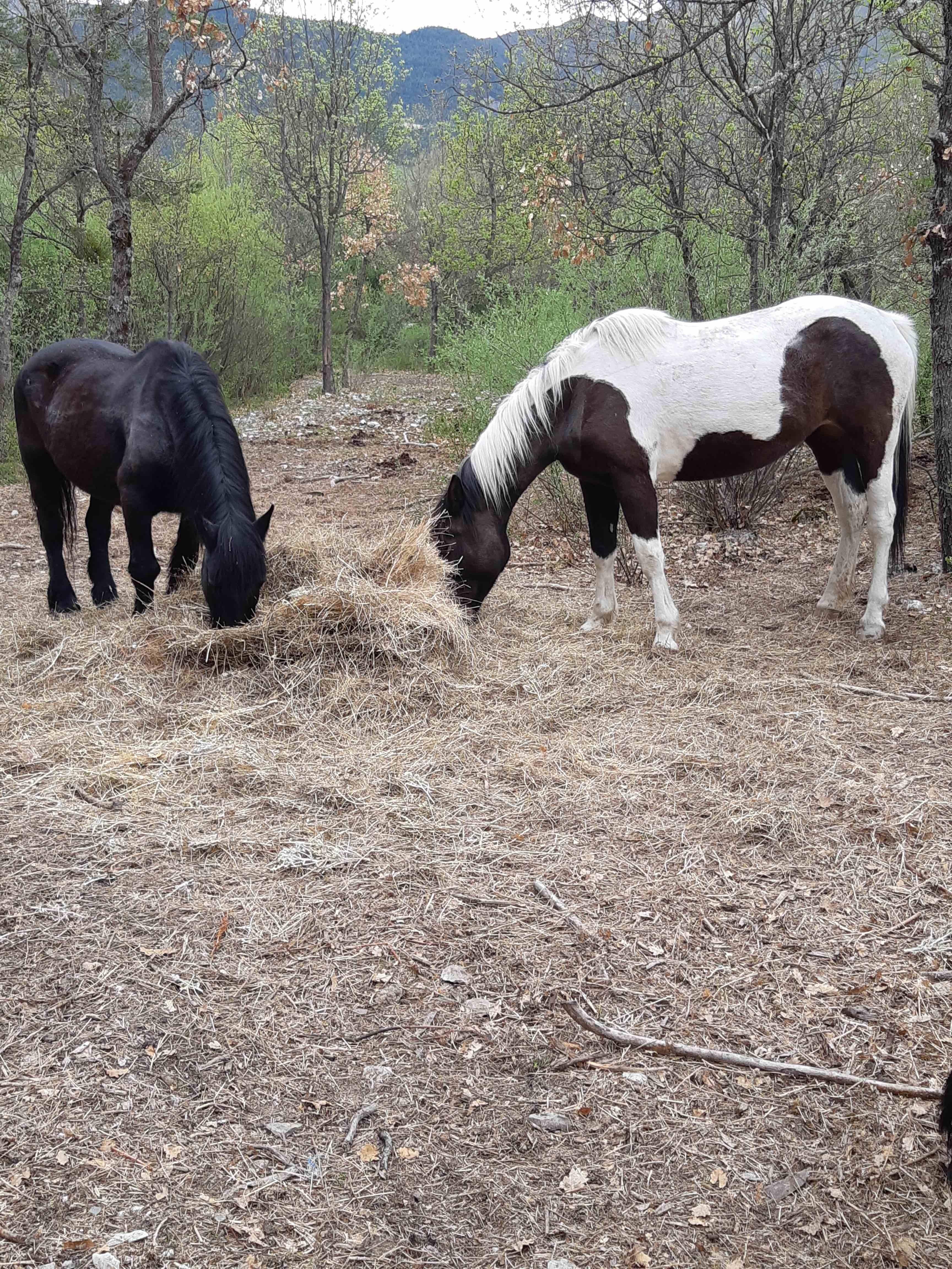 grand-gite-paca-chevaux
