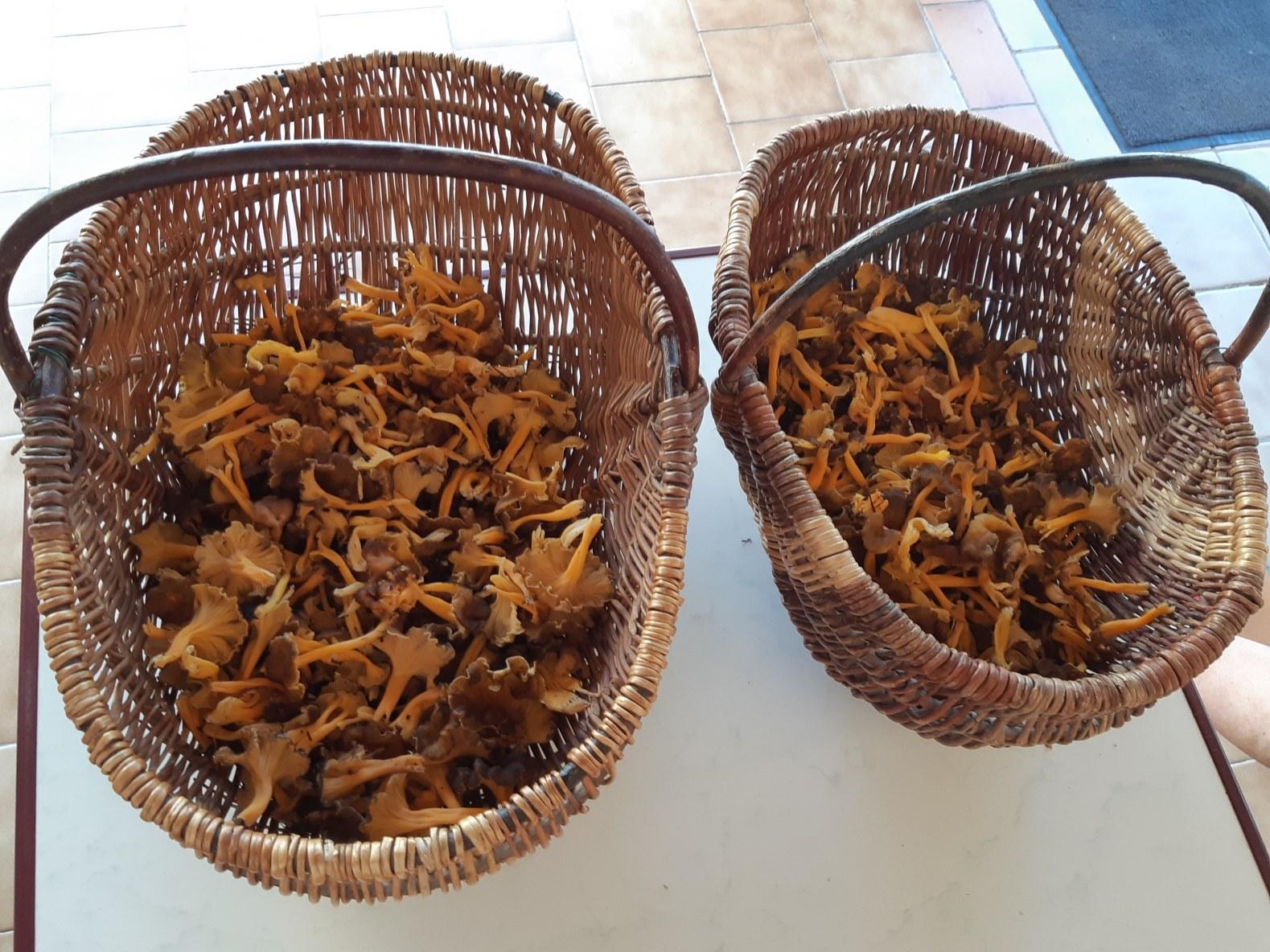 grand-gite-paca-champignons