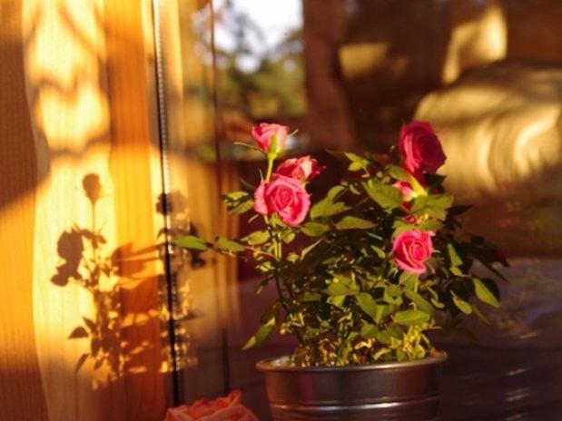 Détail fleurs cabane sur les arbres Domaine des cèdres