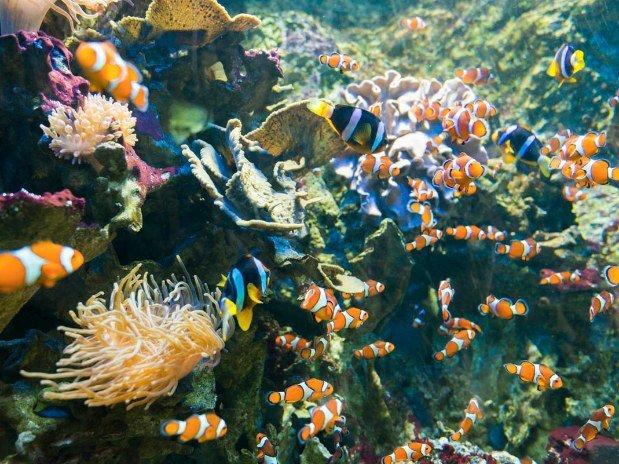 villa-bettina-la-baule-ussim-vacances-ocearium-croisic-poissons