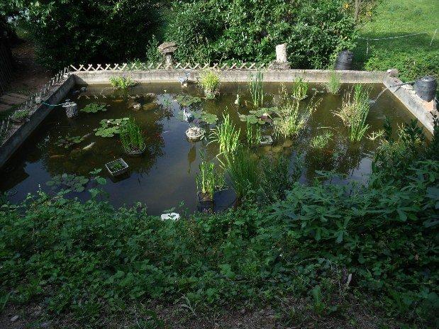 bassin avec des carpes koï