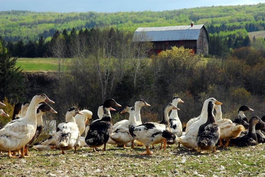 ferme-basque-charlevoix