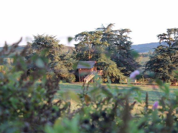 Cabane dans les arbres Loire