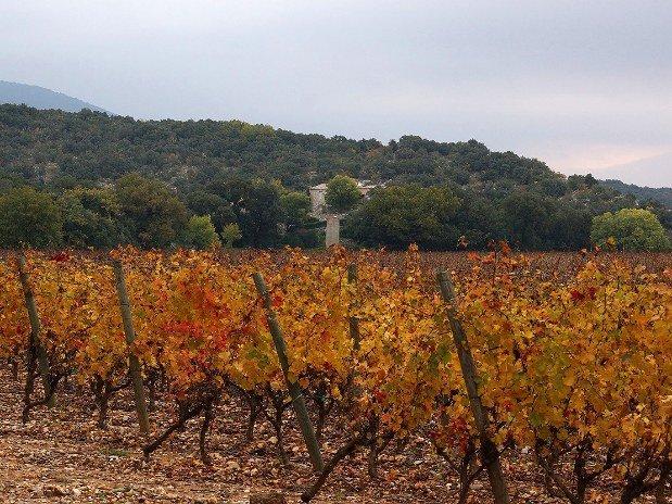 Le Vin 1
