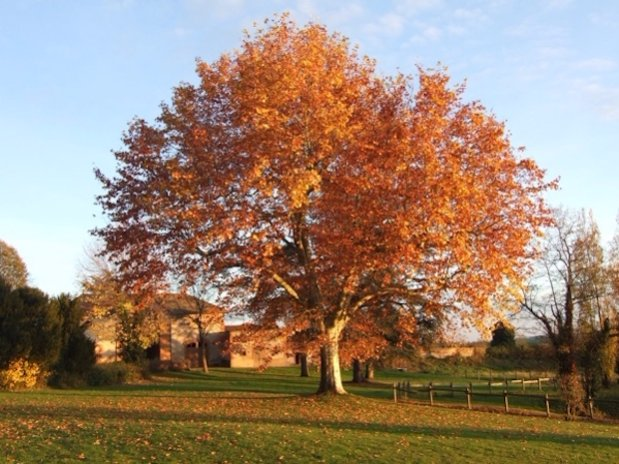 Cabane sur les arbres Loire Château Domaine grands cèdres