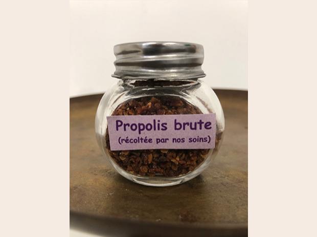 propolis-miel-artisanal-champagne copie