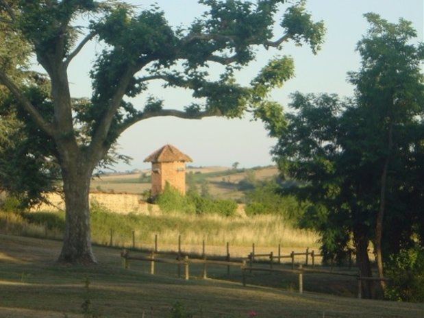 Treehouses domaine grands cèdres Loire