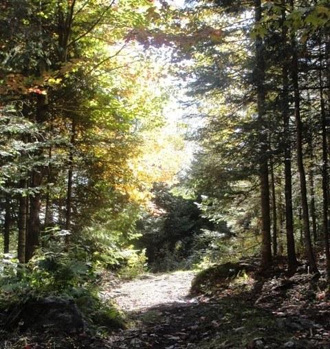 Pourvoirie-chaudiere-appalaches-chalet-à-louer-sentiers