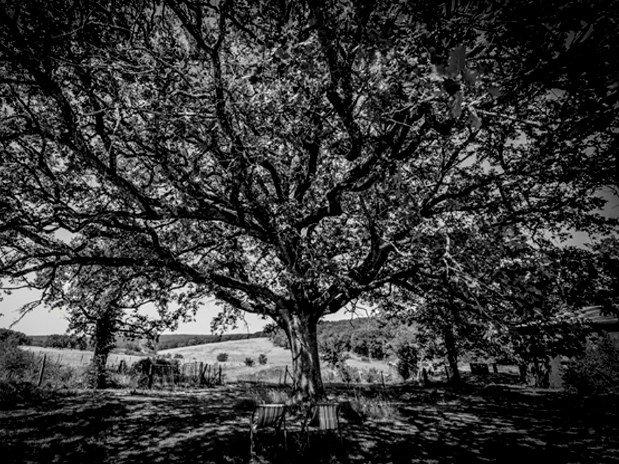 Notre grand chêne