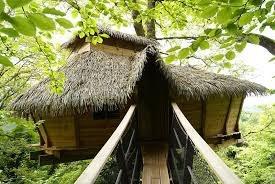 cabane perchée dans les arbres