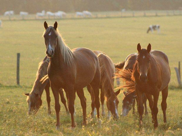 eden-park-hotel-activités-cheval